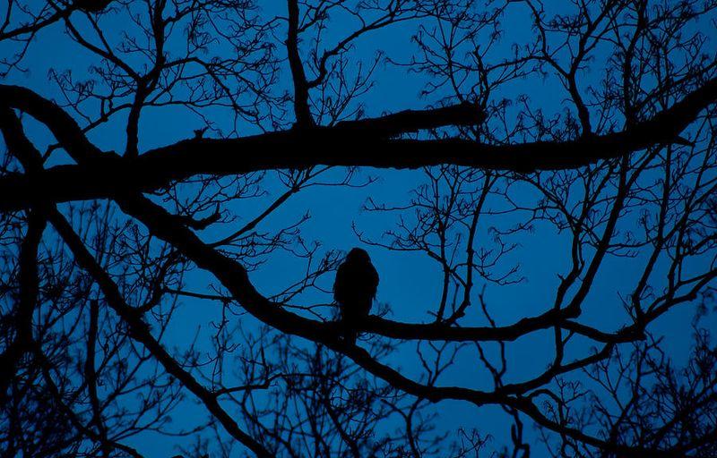 Night, bird